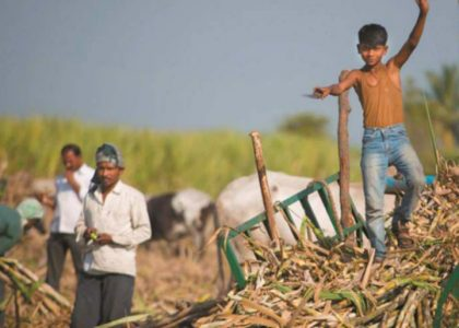 Revaluating Child Labour in Agriculture: The Sugarcane Case of India