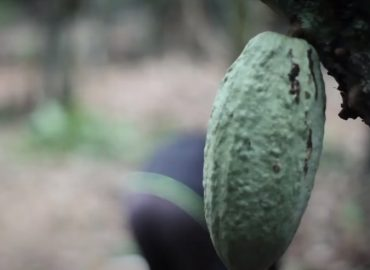 Ghana Union Fights Child Labor in Cocoa Production